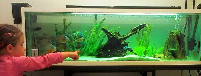 Akváriové rybičky v kaderníctve ELANDER, foto: Miloslav Ofúkaný