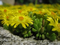 zdroj: Botanická záhrada UK, uniba.sk